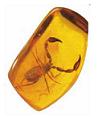 ambre pierre de jeunesse